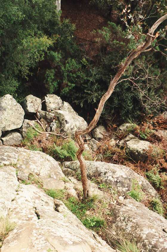 tree-on-rock.jpg