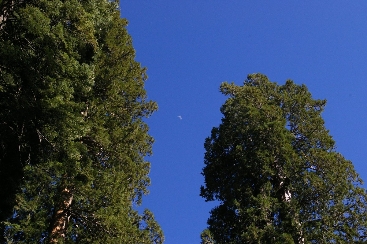 Moon_With_Sequoias.jpg